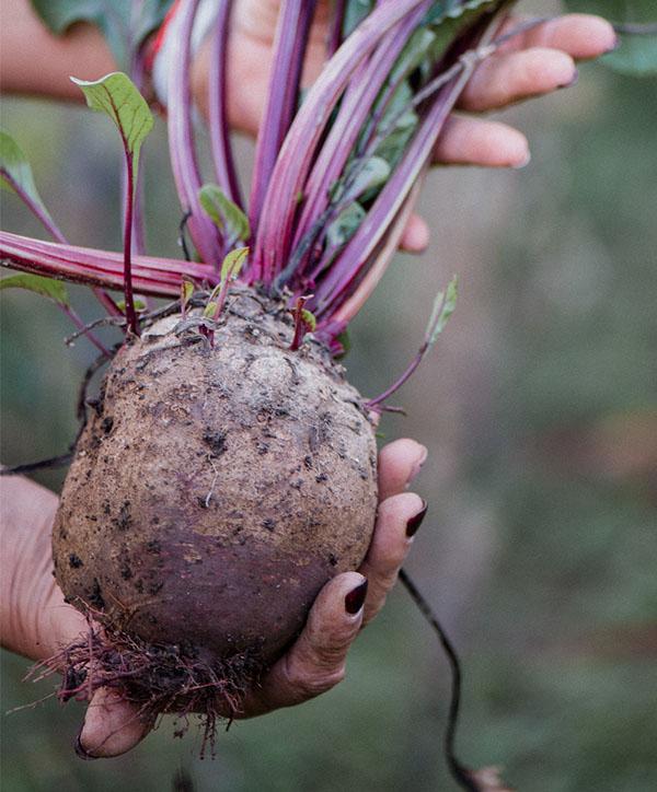 Сайт для фермерского хозяйства